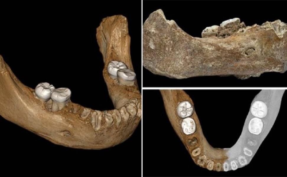 فسیل انسان های نخستین در چین کشف شد