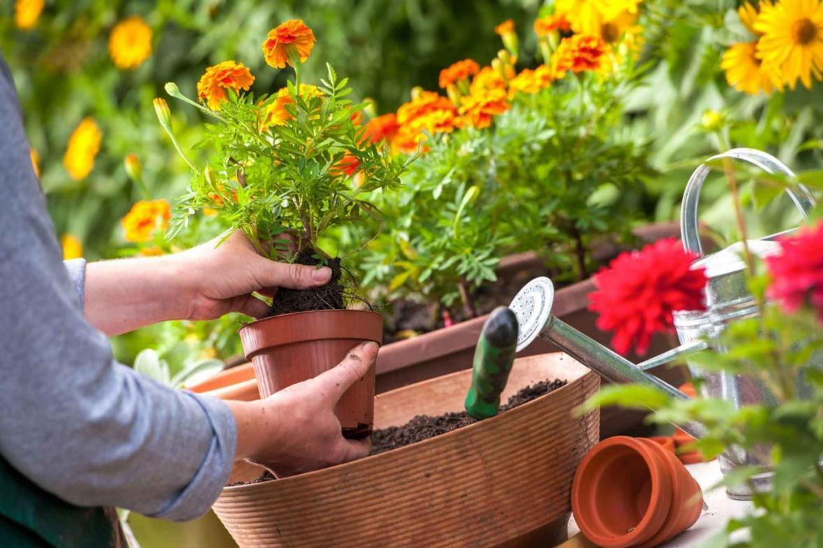 مراقبت از گل و گیاه اضطراب آور است؟!