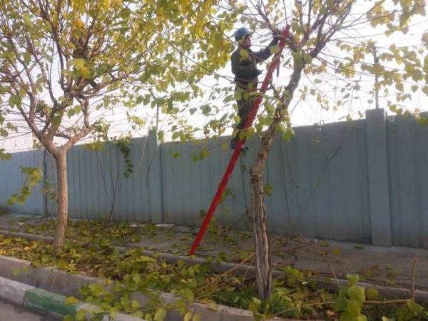 آغاز فصل هرس و بازپیرایی فضای سبز در منطقه 21