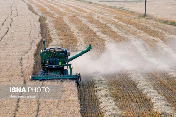 پیش بینی فراوری 265 هزار تن گندم در استان قزوین طی سال 1400